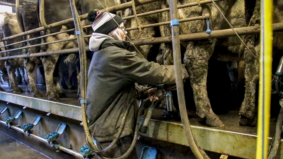 Just 4% of TAMS payments made to female farmers