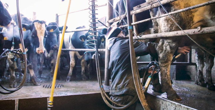 People in Dairy: slow progress but steps being taken