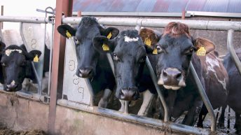 Average concentrate feed use per dairy cow set to jump by 75% this year