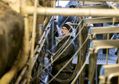 Action plan to address labour issues in dairy published