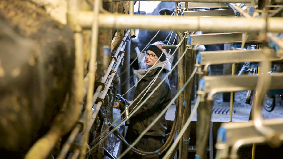 Progressive farmer focus: Breaking down boundaries on a Co. Limerick dairy farm