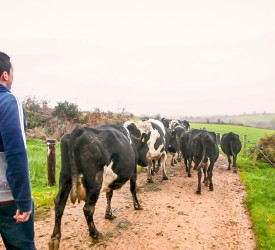 What sets the top performers apart in Irish dairy farming?