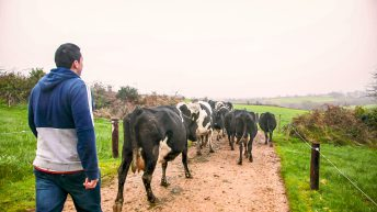 Dairy farmers invested over €400 million in 2017