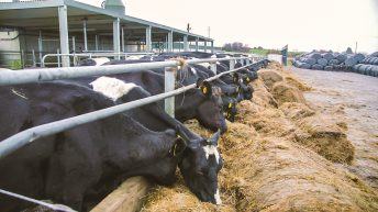 'No one miracle cure to address fodder shortages'