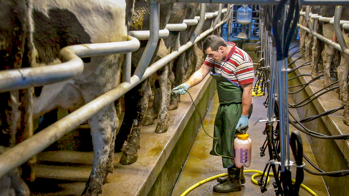 Do we need to be a bit more inventive about who we employ on our dairy farms?