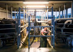 Dairy labour crisis: Creed 'willing' to consider non-EU work permits