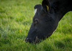 Bord Bia teams up with lobby groups to back dairy farmers