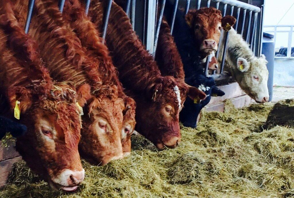 live exports marts fodder action group icsa beef