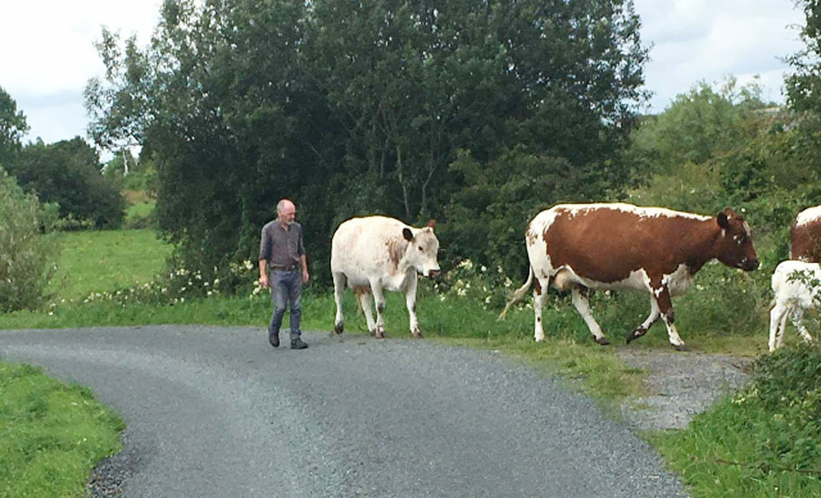 Roscommon-based sculptor turns his hand to cheesemaking