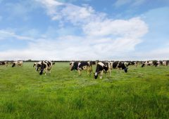 Video: Can you cut electricity costs on your dairy farm?