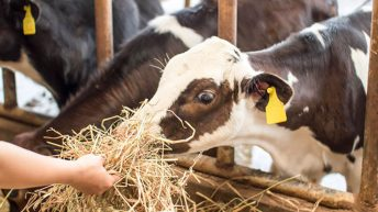 9 out of 10 farm animal welfare complaints unfounded