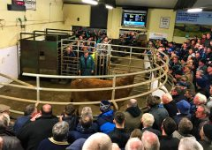 Increased activity from all buyers as trade improves ringside