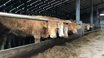 Will your store cattle hit the target this winter?