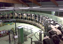 Aurivo announces milk price for December