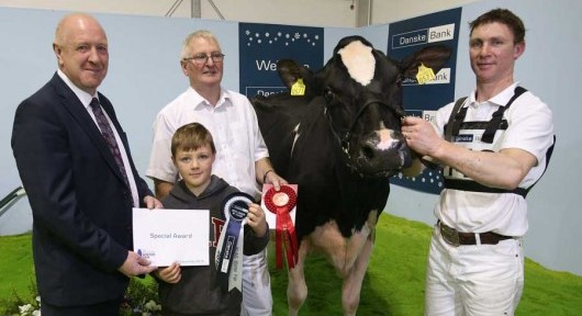 RUAS Winter Fair 2016 Champion Desmond Dundee Embrace
