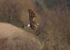 Payments begin under Hen Harrier Programme and other EIP schemes