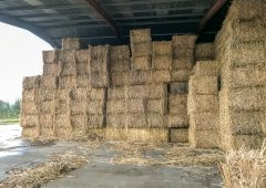 Forage focus: Have you considered miscanthus as a bedding option?
