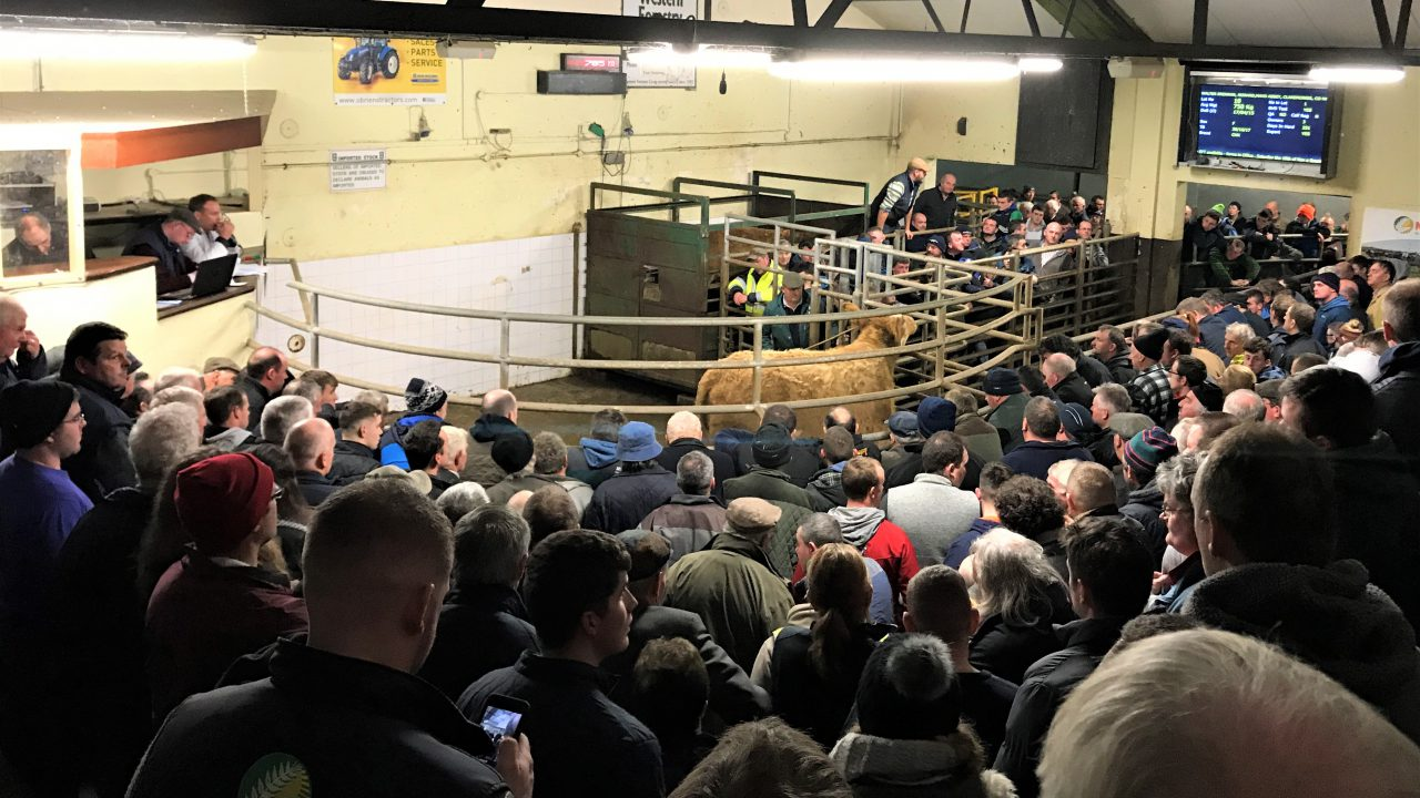 Stores lead the way as cattle marts 'close up shop' for Christmas
