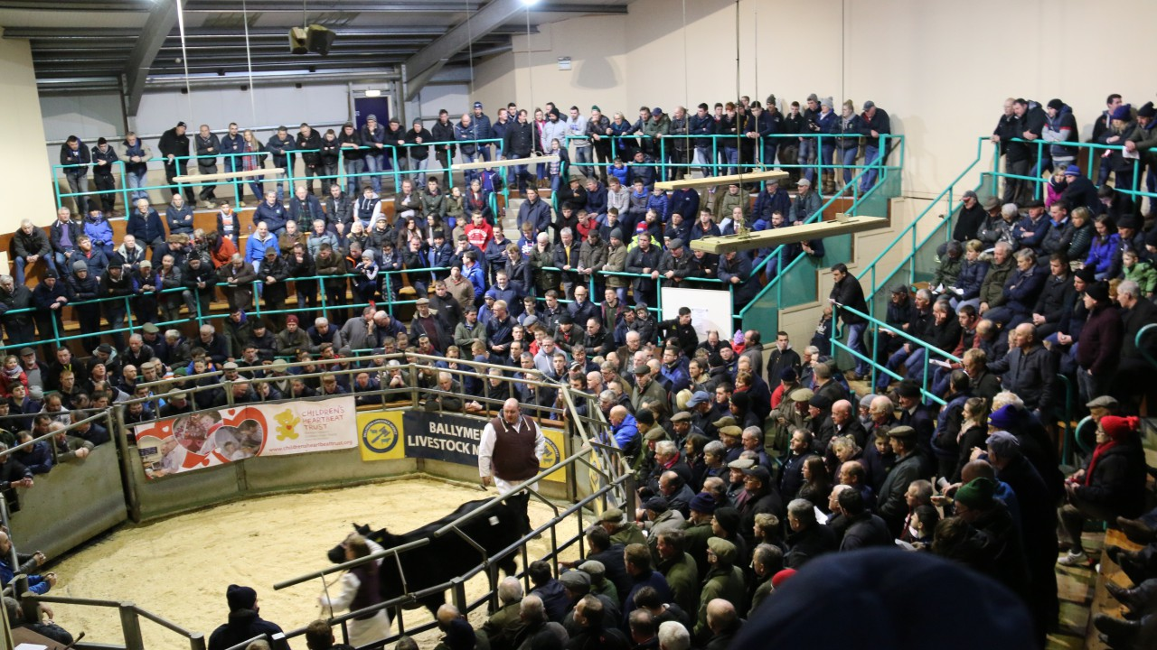 Charity livestock auctions reach just shy of £100,000 target
