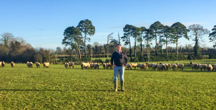 Sheep focus: Going down the New Zealand route in Co. Laois