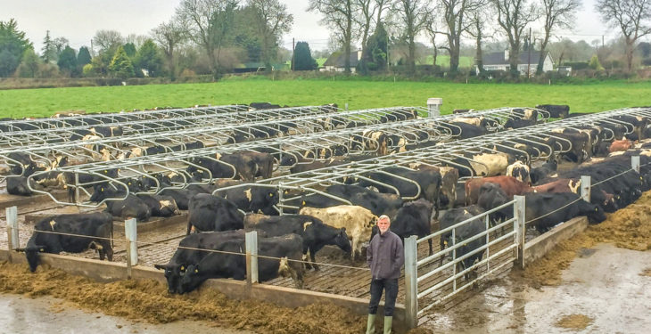 Dairy focus: Gearing up for a 'calf tsunami' in Co. Meath