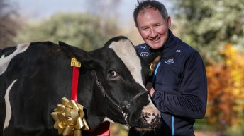 Watch: Jim Gavin takes a cow for a stroll around Dublin