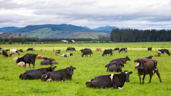 Want to see what New Zealand farming has to offer?