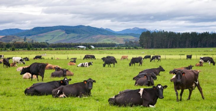 AgriNet Grass software being used by New Zealand's biggest dairy farm business