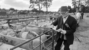 Aughrim sheep breeders revive show memories with book launch