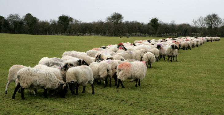 Looking for an alternative method of supplementing your ewes?