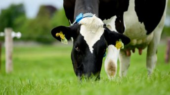 US milk production continues on its upward trend