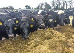 Arrabawn follows suit with milk price trend for December supplies