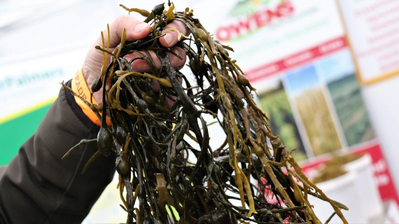 Is seaweed the secret to success in antibiotic-free farming?