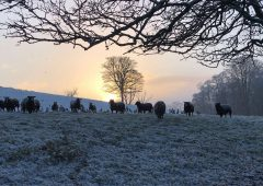 Met Eireann issues nationwide snow-ice warning