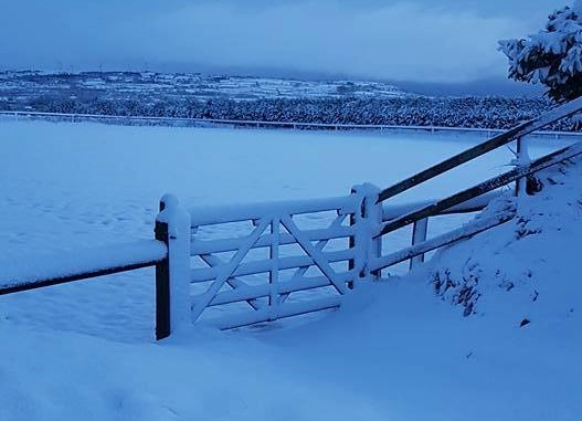 Snow on gate in Co. Antrim