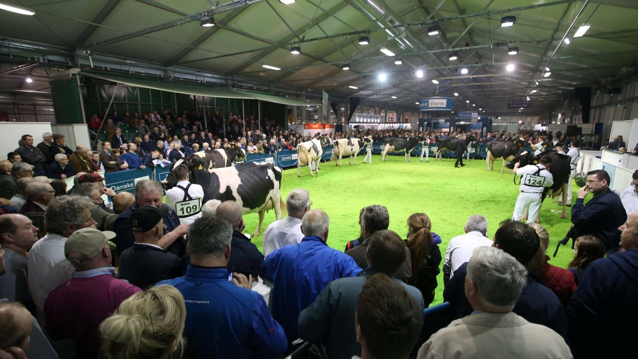 Winter Fair: Just two days to go until the North's flagship dairy show