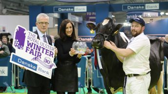 Winter Fair: Crowds flock to Ireland's largest dairy show – follow the action as it happens