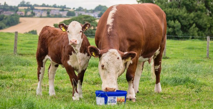 Making the most out of forage with Crystalyx Cattle Booster