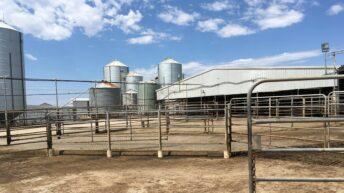 Mega farming: Meet the southern Australia family managing 2,300 cattle