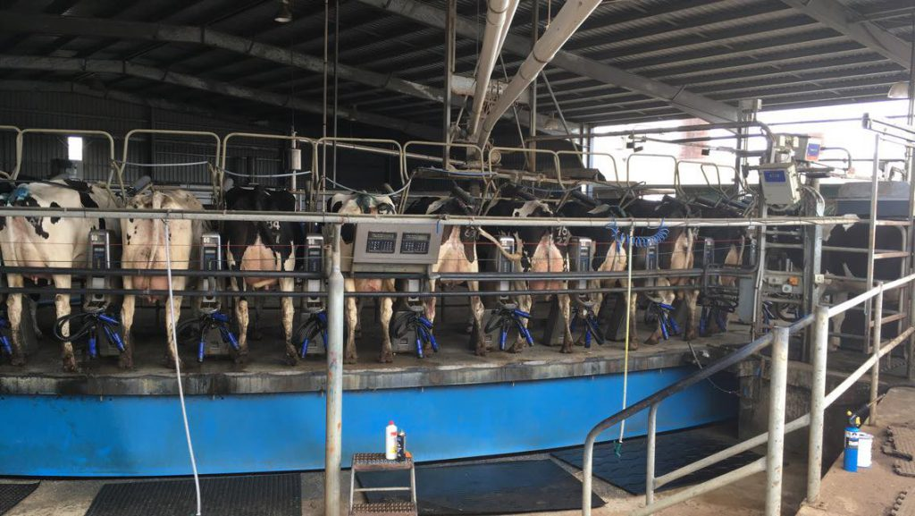 Holstein Australia, HYB, Heather Martin, Holstein UK