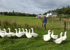 Slane estate 'rocks on' with farm diversification projects