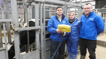Poor heifer management could be costing your business