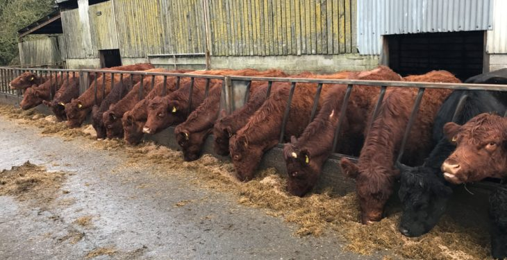 Beef focus: Breeding the best of both worlds in Co. Meath