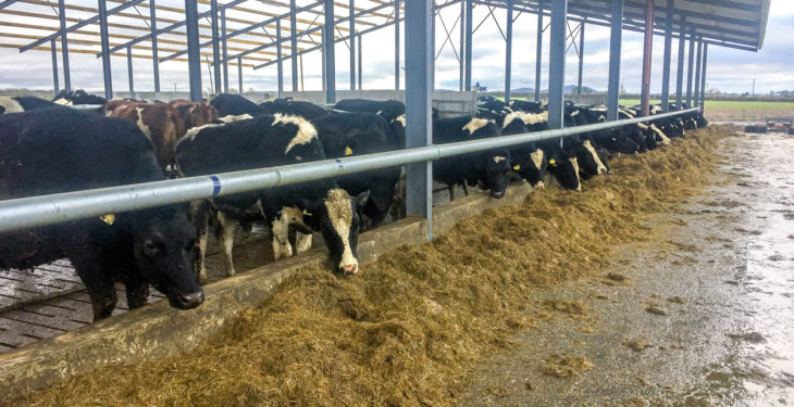 Dairy focus: Expecting 120 cows to calve in 21 days in Co. Laois