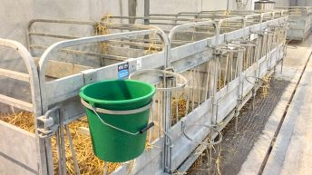 Is your calf shed fit for purpose?