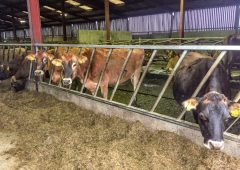 Dairy focus: Gearing up to calve 220 cows in February