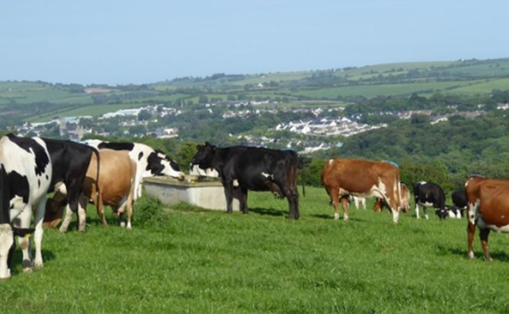 Entering the labour 'red zone' on a Co. Cork beef-to-dairy conversion