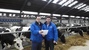 CAFRE cows to welcome visitors on dairy open days