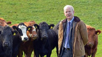 AFBI to present profit-based research findings at major dairy open day