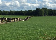 Growing a 400-cow unit with work/life balance in mind